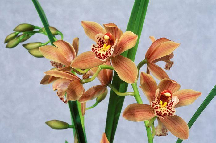 Petit choix de photos d'orchidées pour faire un peu la nique à Gérard, car certaines sont des fleurs de zone froide qu'il ne peut pas cultiver chez lui.