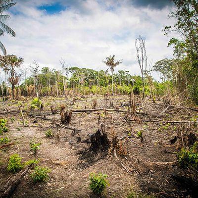 La forêt amazonienne en danger !