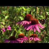 Jardins et Gens du Nord : le jardin de Didier Willery
