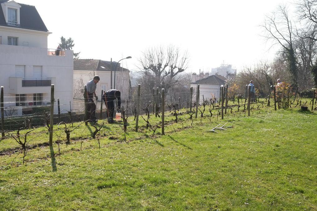 Les jardiniers-vignerons entretiennent la vigne.....dès le mois de février