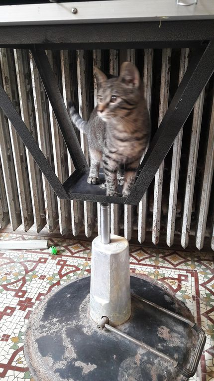 Elle est adoptée: MAYA, petite chatte stérilisée de 8 mois