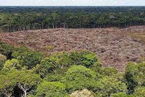 Incendies dingues en Amazonie: Bolsonaro accuse la sécheresse et les ONG, un expert lui répond sèchement