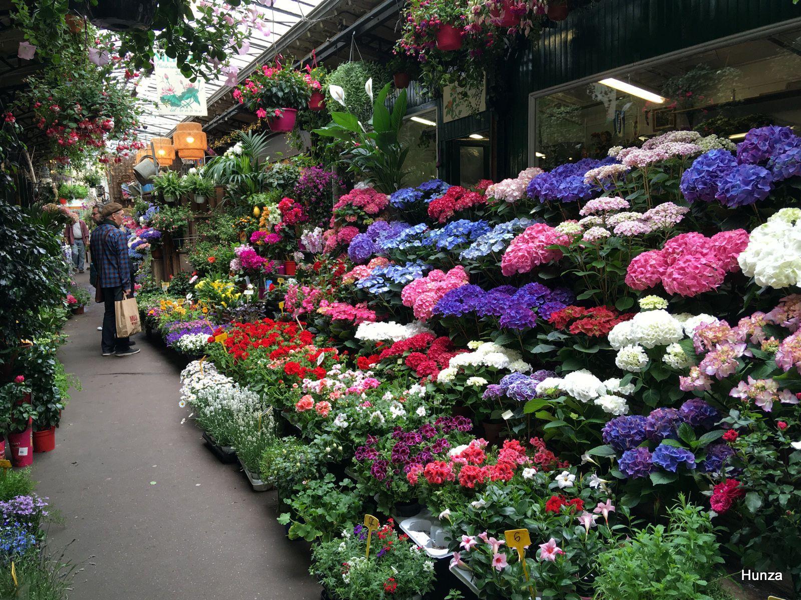 Paris, le marché aux fleurs
