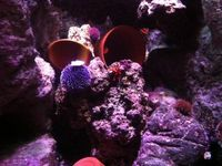 A la découverte de l'Aquarium de Paris !