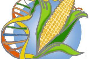 La Russie interdit les OGM sur son territoire