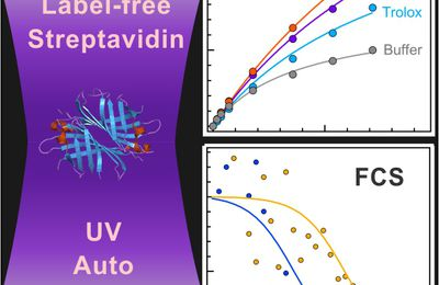 Ultraviolet Photostability Improvement for Autofluorescence Correlation Spectroscopy on Label-Free Proteins