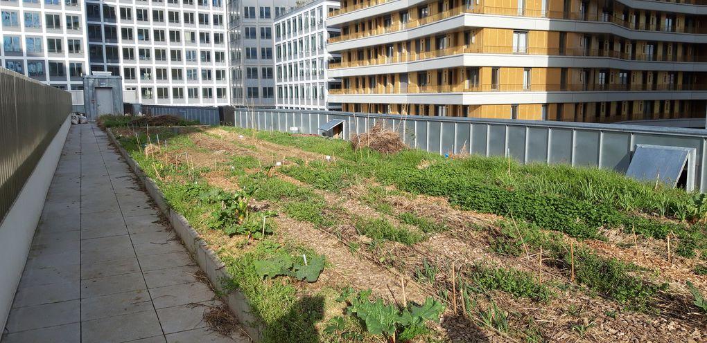 Chapelle International : site Veni Verdi et photos du jardin sur le toit de l'école Eva Kotchever  -  ASA PNE