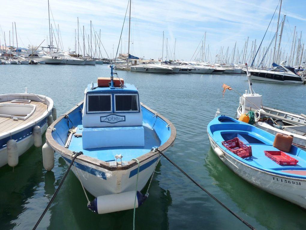 MOINEAU dans le port de Sanary sur Mer le 12 mai 2014