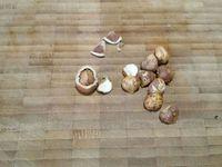 3 - Préchauffer le four th 6 (180°). Peler les poires en conservant les queues, les badigeonner au pinceau avec le jus du citron. Beurrer un moule à cake, y verser la moitié de la pâte, disposer les poires entières côte à côte,les enfoncer légèrement et verser le reste de pâte entre les fruits. Casser les noisettes, les concasser grossièrement et répartir les éclats sur le cake. Enfourner pour 45mn environ (th 6) et à mi-cuisson recouvrir le cake d'une feuille de papier aluminium. Démouler le cake à la sortie du four et laisser tiédir sur une grille avant de servir.