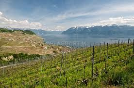 Vaud offers an endless variety of wines