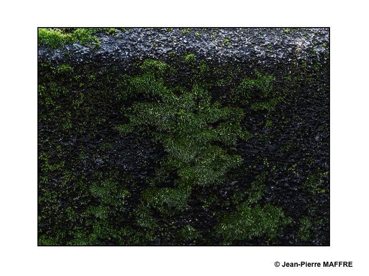 Quand la nature reprend ses droits sur un mur de pierre.