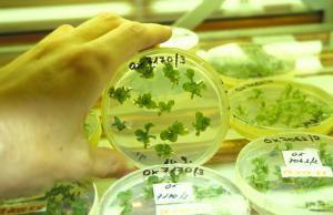 Ils sont nouveaux, les autres OGM, Organisme Génétiquement Mutagéné, doivent-ils être invisibles ?