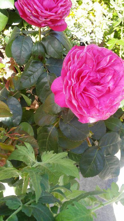 Album de couleurs déposer sur www.mariequivivre.com le samedi 01-07-17 de Quivivre