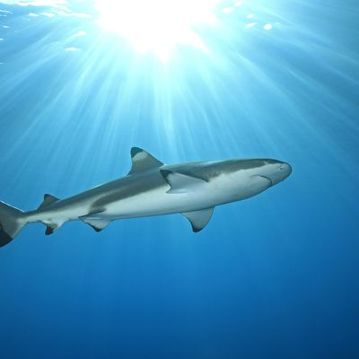 7 Common Shark Species You May Land On a Cocoa Beach Fishing Charter and Around Florida