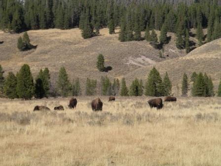 <p>D&eacute;couverte du Montana et du Wyoming....</p>