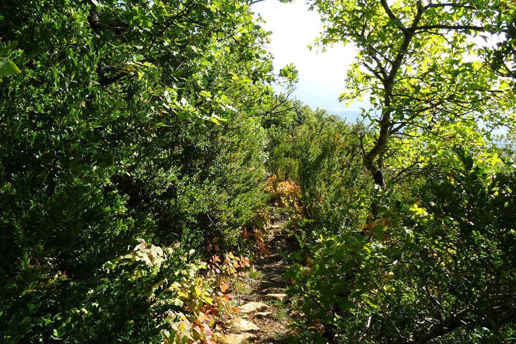 L'automne s'est installé, dans les bois les couleurs flamboient !