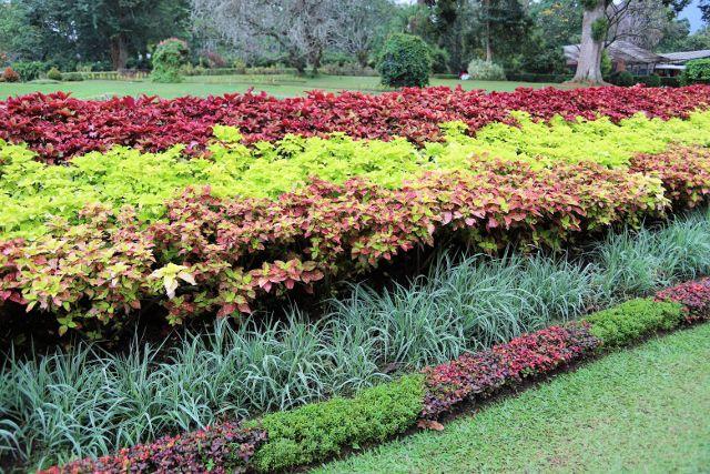 Jardin de Peradeniya les plantes - Kandy - Sri Lanka