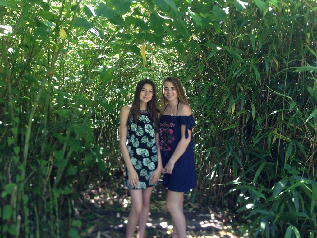 Chemin dans les bambous Sasa - 2 photos