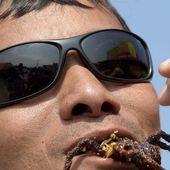 Trop mangées, les tarentules disparaissent
