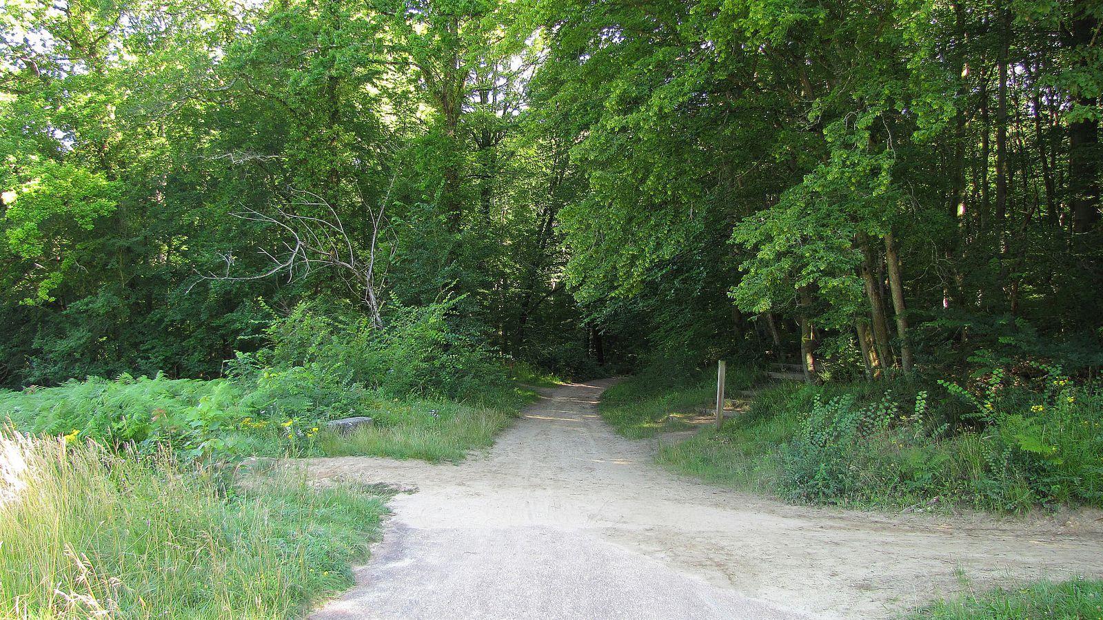 carrefour_Avenue des Beaux Monts_Route Eugénie (1)