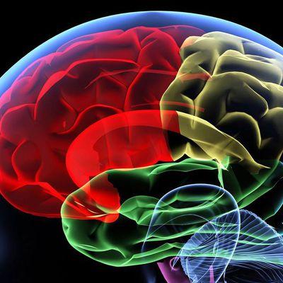 Ces ondes émisent par notre cerveau