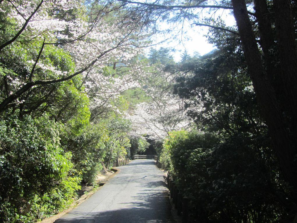 Album - japon-miyajima