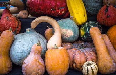 Intoxication alimentaire : attention aux courges !