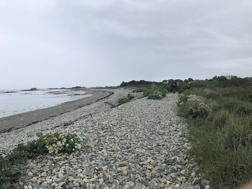 Randonnée de Louannec à Port-Blanc, 15 km.