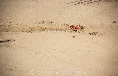 Galápagos : derniers jours