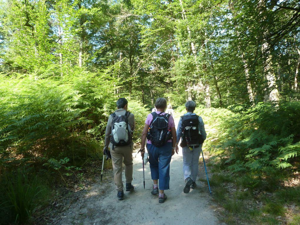 Randonnée de Bois-le-Roi à Fontainebleau, 15,2 km.