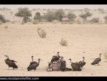 Les cousins du Tchad