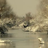 Delta du Danube - Bernaches à cou roux