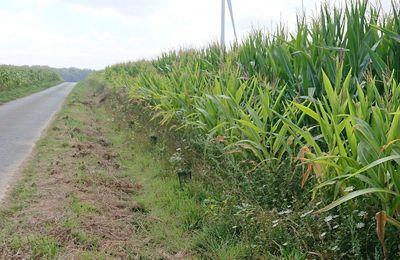 Enjeux pesticides : Zérophyto autour des parcelles traitées avec des bandes non-traitées généralisées de 5 mètres