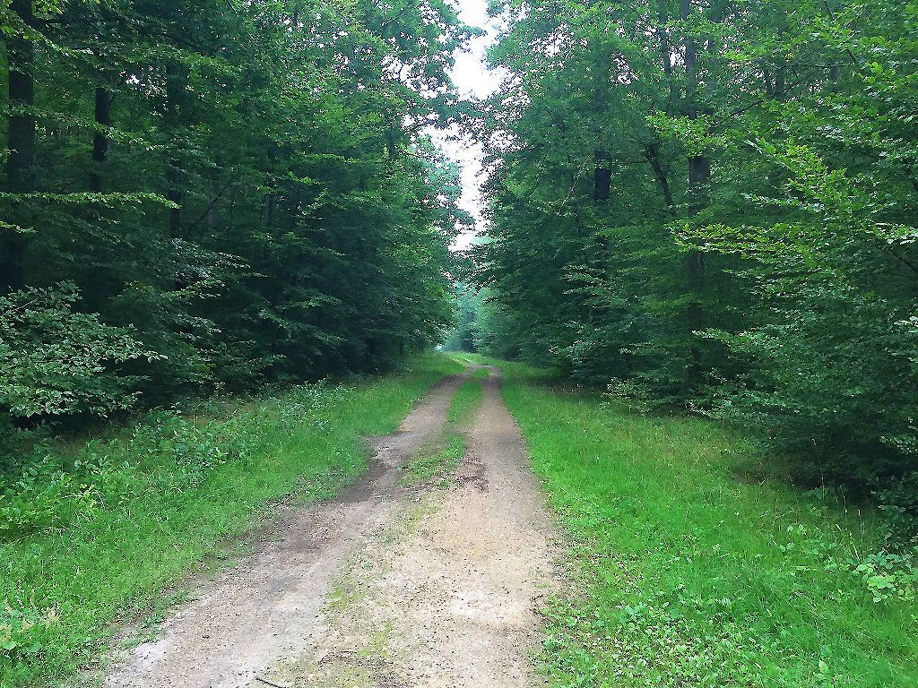 carrefour_Route de la Gouvernante_Route des Chambres du Vivier