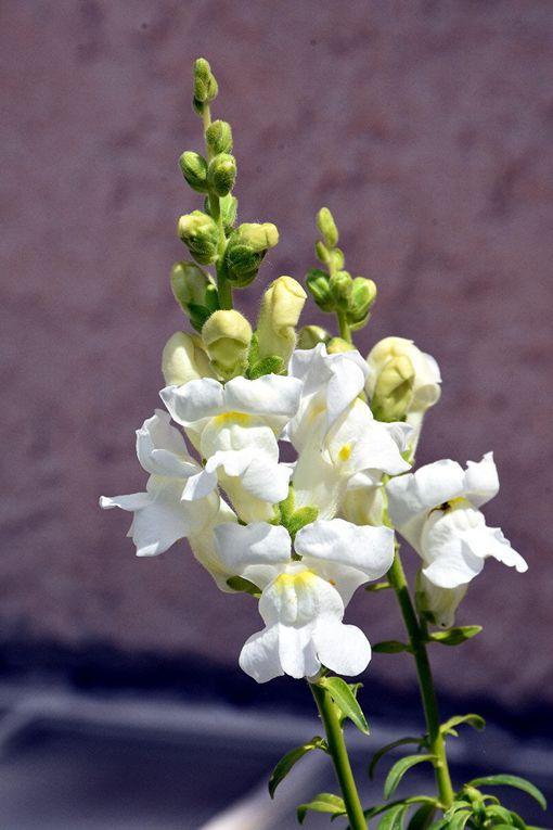 LE MIRACLE DES FLEURS & DES ORCHIDEES (3)