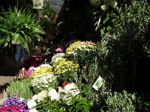 Paris – 4ème arrondissement - Le Marché aux Fleurs