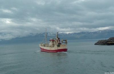 Islande : à Husavik, la chasse (photo) à la baleine - Whale watching