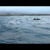 Download video: Drive to dolphins with Joan Ocean's group, march 2012, Kona, Big Island, Hawaii.MOV