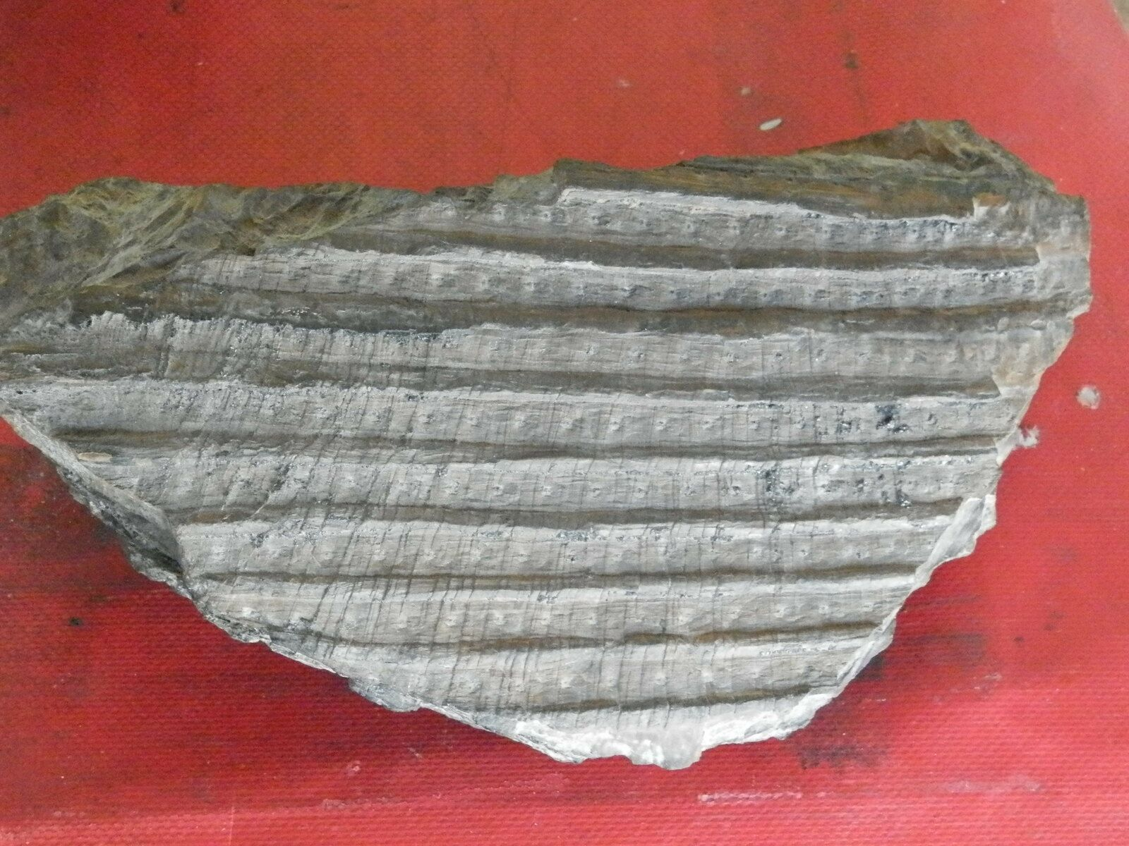 Bois Fossile ( Graissesac ) - goelandmedia.prod@gmail.com (c) - Hérault - Occitanie