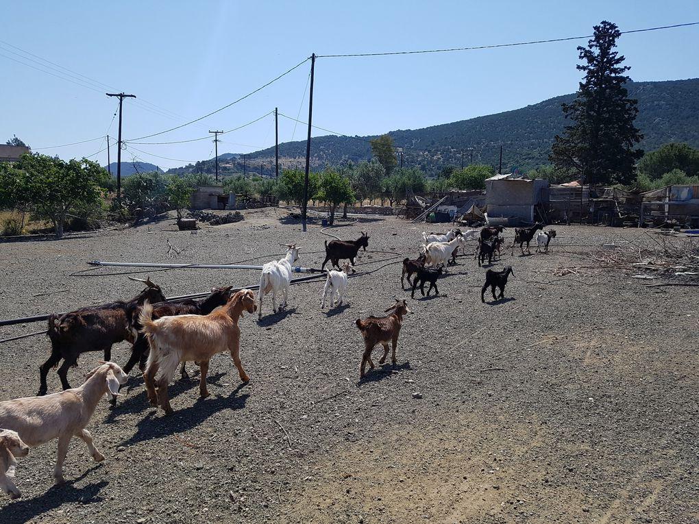 Visite matinale à la ferme de nos amis Takis et Sidorela, on est reparti avec oeufs, fromage et patates