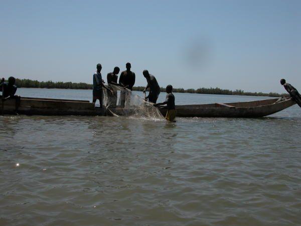 Les bolongs très poissonneux représentent près du quart de la superficie de la basse Casamance.