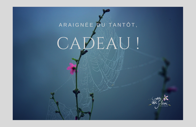 89 - « Araignée du tantôt, cadeau ! »