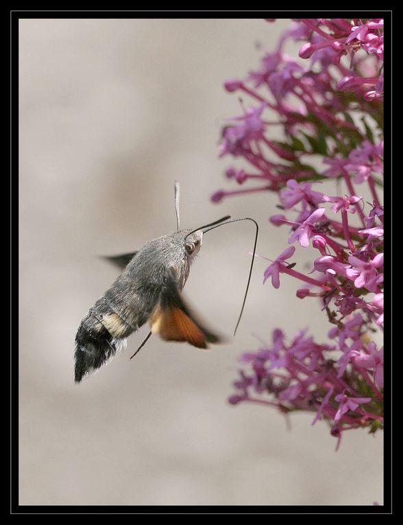 """Z'Album"" : insectes"