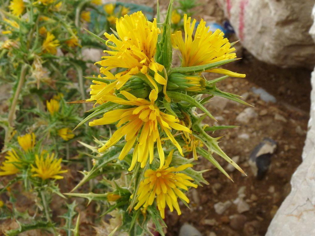 Fleurs 101