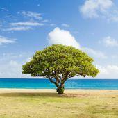 Les battements de coeur des arbres - Yanis Azzaro Voyance Astrologue