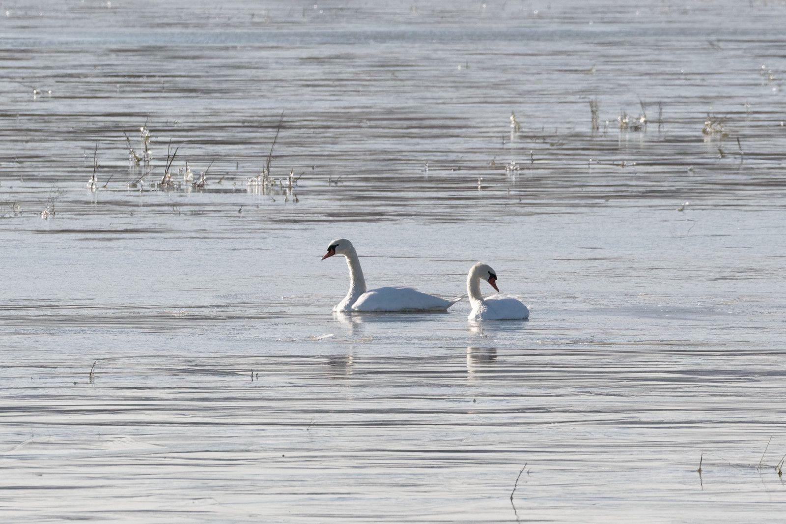 549 - Au pays de la glace, lois physiques s'associent aux couleurs éclatantes du monde aviaire : 13/02/2021