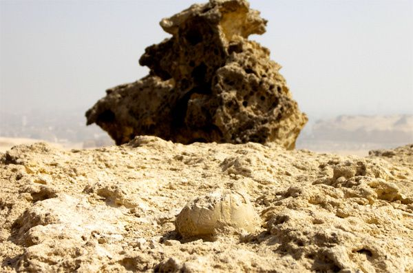 Decouverte de fossile sur le plateau de Giza