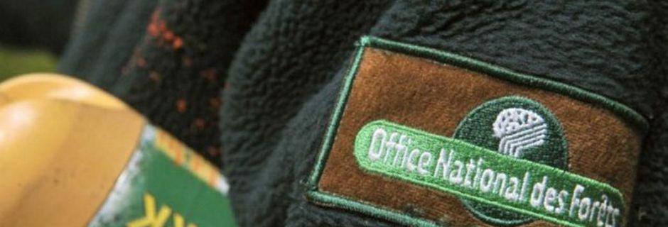 L'État poursuit le tronçonnage de l'Office national des forêts