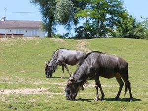 Zoo de Beauval : le parc des éléphants et la plaine africaine