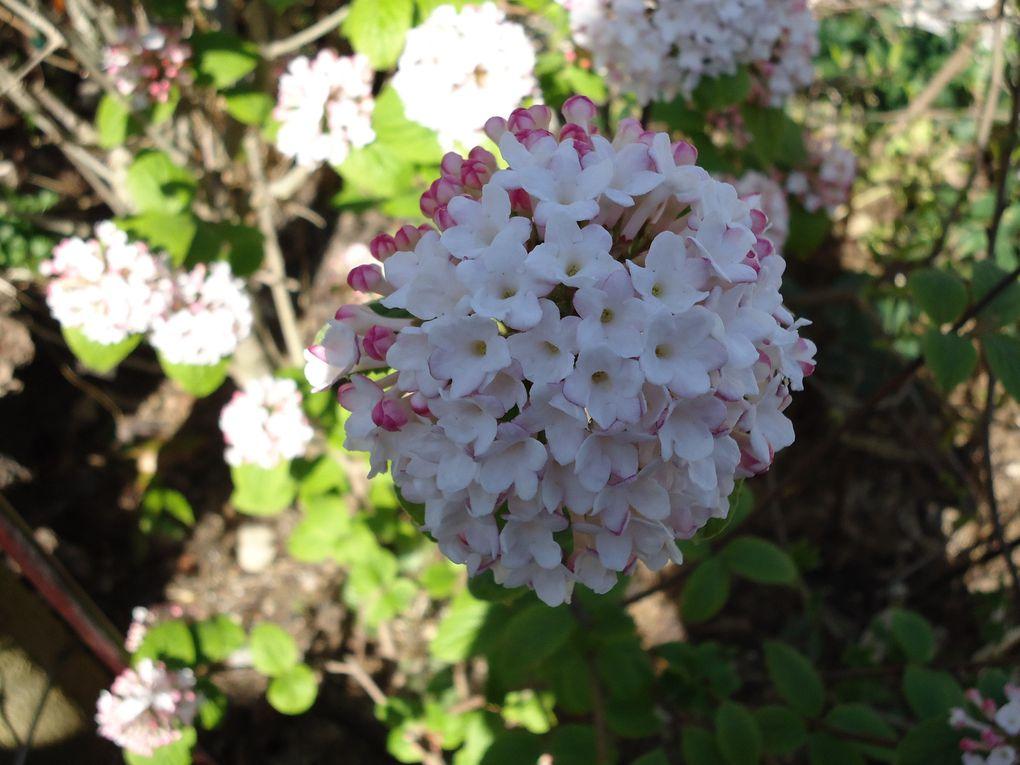 Album - le-clos-fleuri-en-avril